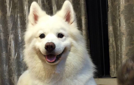 长沙不办狗证可以养狗吗 有人已经被罚2000元